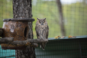 Owl Safari Park Primorye birds