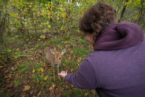 roe deer at the safari park primorye tours vladivostok tours animals nature ecotours