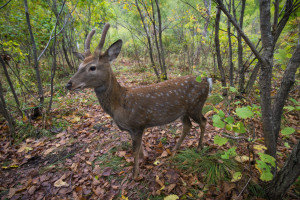 sika deer safari park primorye tours vladivostok tours animals nature ecotours