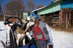 husky ride winter primorye